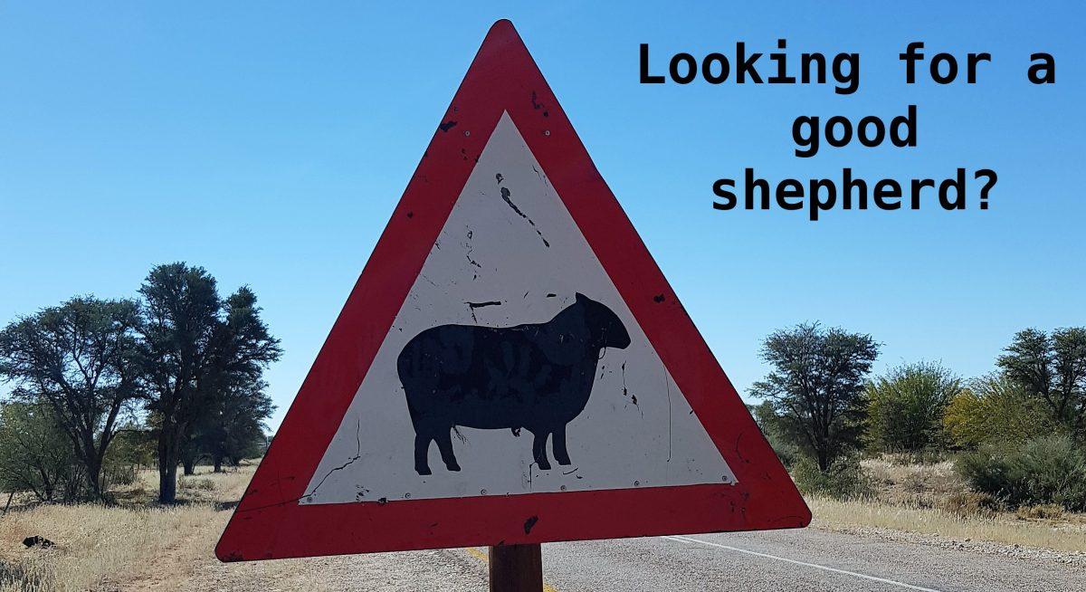 Shepherd Led Life